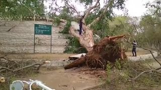 Storms in India have uprooted trees
