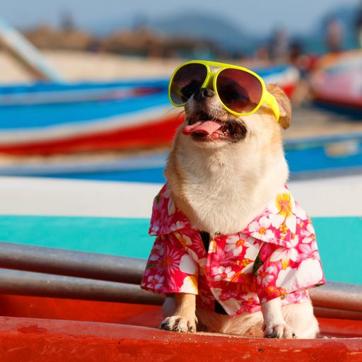 UK weather: 10 tips to stay cool and safe in a heatwave