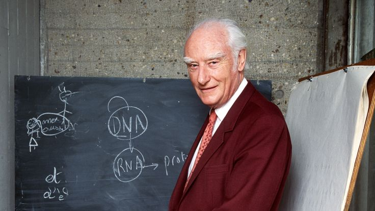 Francis Crick, pictured in 1993, worked to discover the molecular structure of DNA