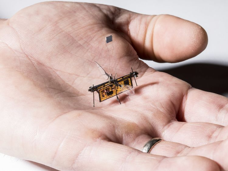 RoboFly, the first wireless insect-sized flying robot, is slightly heavier than a toothpick. Credit: Mark Stone/University of Washington