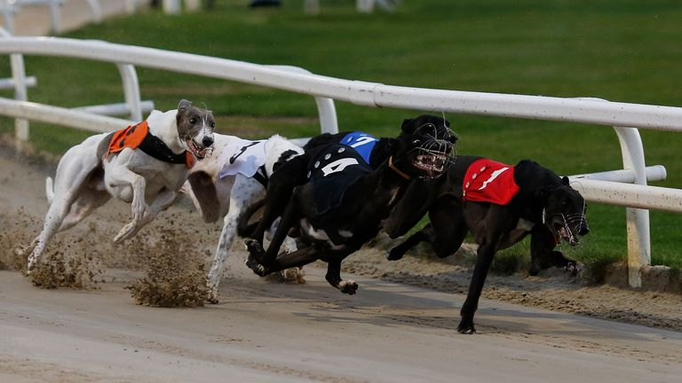 TOWCESTER, ENGLAND - JULY 01: Astute Missile (T4, black) at the first bend before going on to win The Star Sports 2017 English Greyhound Derby Final at Towcester greyhound track on July 1, 2017 in Towcester, England. (Photo by Alan Crowhurst/Getty Images) *** Local Caption *** Astute Missile