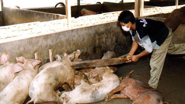 An outbreak in Malaysia was spread by pigs