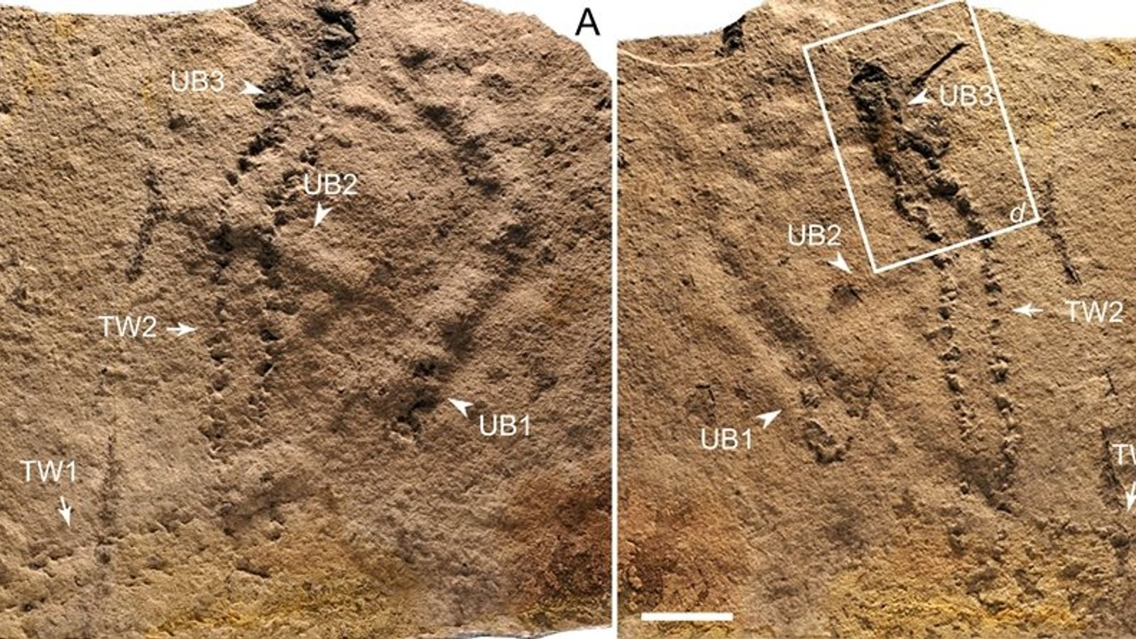 Scientists find 540-million-year-old footprints