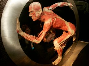 Blind people explore the plastinated body of a man at the Korper Welter exhibition by doctor Gunther von Hagens at les Caves de Cureghem on January 19, 2009 in Brussels, Belgium