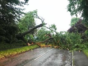 Trees were downed in Chipping Norton, Oxfordshire. Pic: Abi Collins