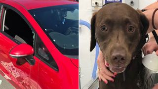 Officers smashed a window to rescue the dogs