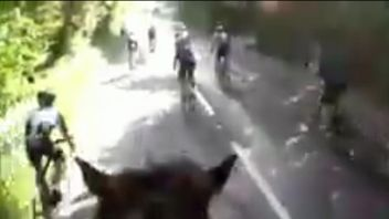 Triathlon organisers are investigating as a horse was hit and its rider hurt by cyclists racing too close to them.