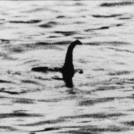 Loch Ness monster might be a giant eel, scientists say