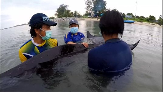 The whale died on Friday despite the efforts of rescuers