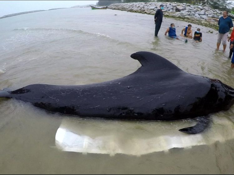 Whale dies after eating more than 80 plastic bags
