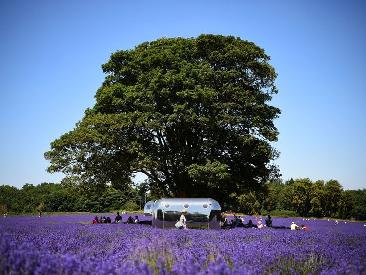 People enjoy the sun at Mayfield Lavender Farm in Sutton, south London