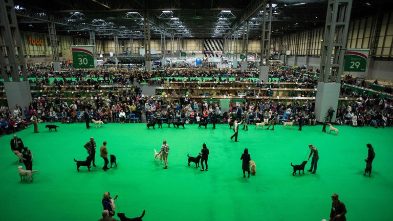 Crufts is held at the NEC