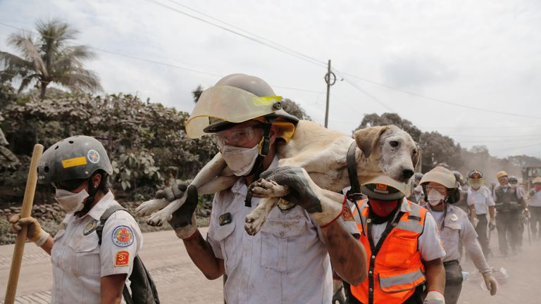 A firefighter carries a dog at an area affected by the eruption of the Fuego volcano in the community of San Miguel Los Lotes in Escuintla, Guatemala June 5, 2018. REUTERS/Luis Echeverria