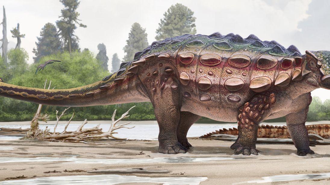 new species of armoured dinosaur discovered in utah