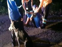 Max the dog stayed with injured cyclist Marin Ion after he fell off his bike in Mount Semenic, Romania.