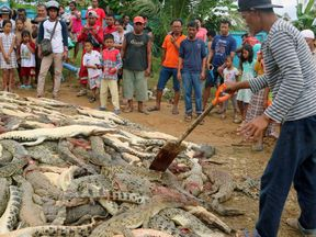 Residents look at the carcasses of hundreds of crocodiles from a farm after they were killed by angry locals
