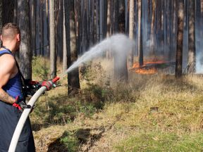 Firefighters tackle a forest fire