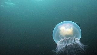 Everything from seahorses to jellyfish can be found in the UK's waters