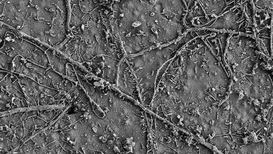 After a few weeks in soils, numerous soil microorganisms colonized the surface of the PBAT films and had begun to biodegrade the polymer. (Electron microscopy image) Credit: ETH Zurich / Environmental Chemistry Group