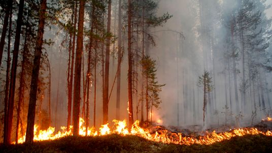 Homes were evacuated as Sweden saw unprecedented weather conditions