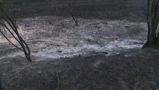 A huge stretch of land in north-east London has burnt following a grass fire