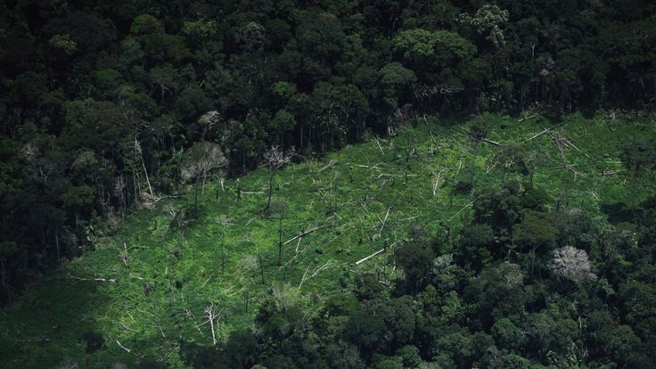 Deforested jungle inside the Ashaninka Indian territory in Brazil's northwestern Acre state