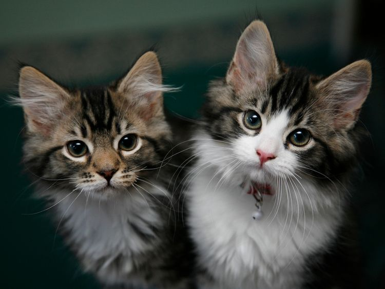 A Parasite Found in Your Cat's Poo Can Affect Your Decision Making
