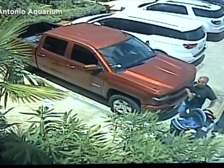 The shark was loaded into a truck and driven away. Pic: San Antonio Aquarium