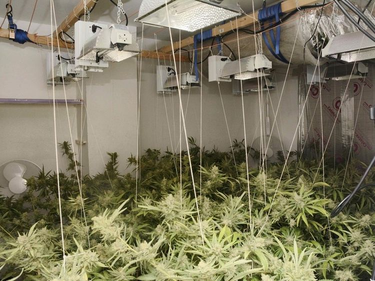 Teresko had vanished from a rented house that had been turned into a cannabis factory. Pic: Surrey Police