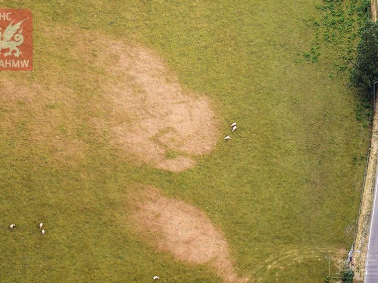 Faint but unmistakable cropmarks of newly-discovered early medieval square barrows, south Gwynedd. Pic: RCAHMW