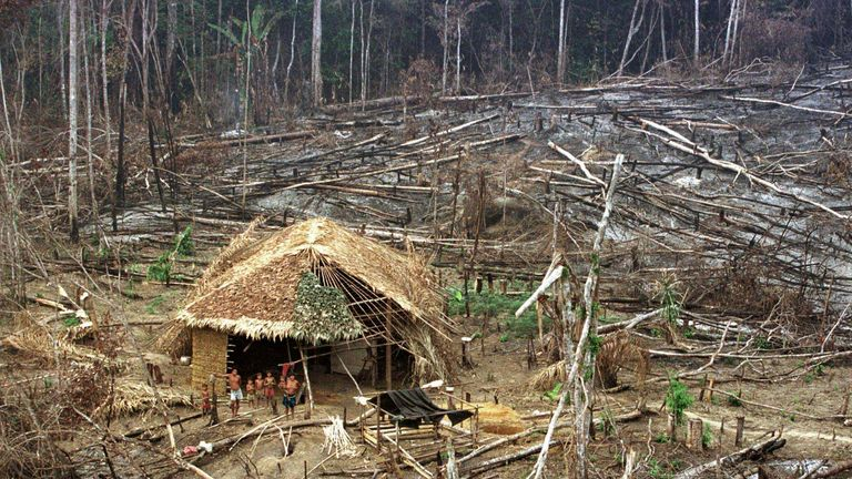 Deforestation remains a huge threat to the tribes of the Amazon