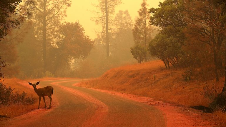 A deer stands in a forest covered in fire retardant