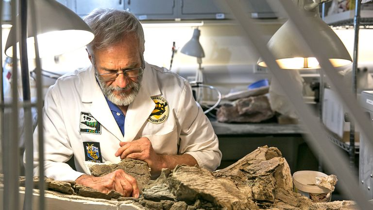Expert preparator Randy Johnson, spent hundreds of hours removing the Akainacephalus johnsoni skeleton from the surrounding rock and debris. The species portion of the dinosaur name was selected in his honor. Credit: Mark Johnston/Natural History Museum of Utah