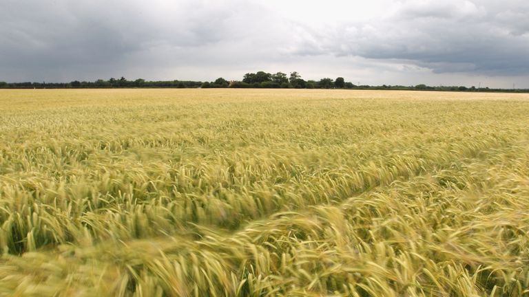 Farming is severely affected by changes in the weather