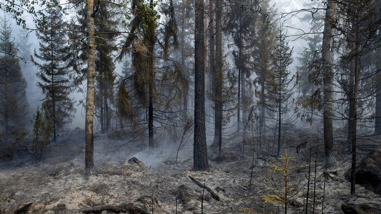 Burnt undergrowth is seen during a wildfire in Pyharanta, Finland July 18, 2018