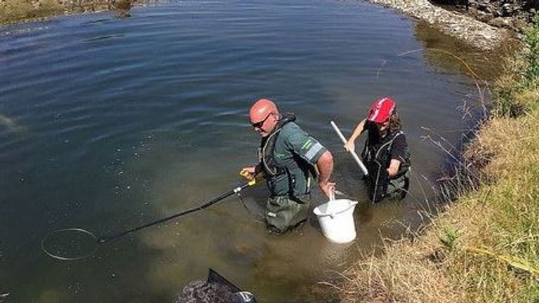Environment Agency staff rescued 300 trout