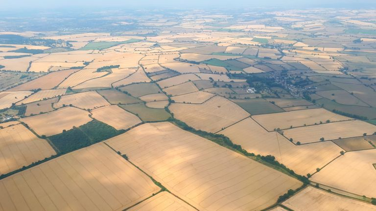 Yellow fields seen from the Sky helicopter over Leicestershire