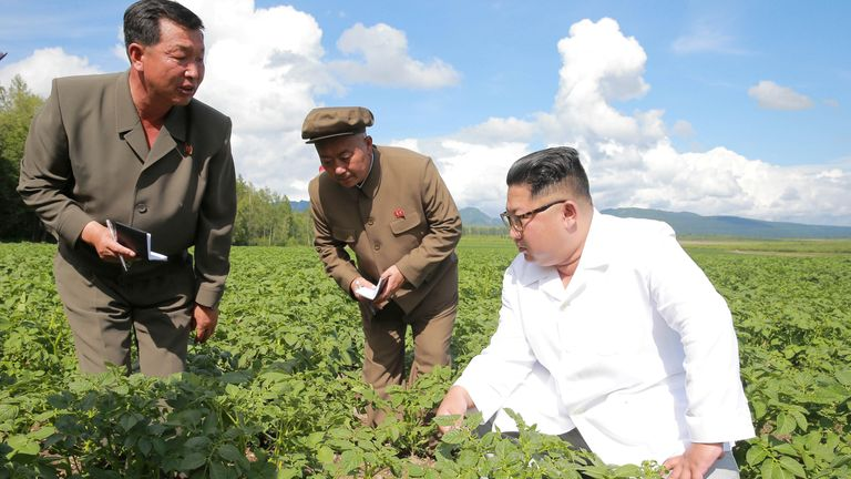 Kim Jong Un knelt on the ground to inspect potato plants in Samjiyon county on the China border