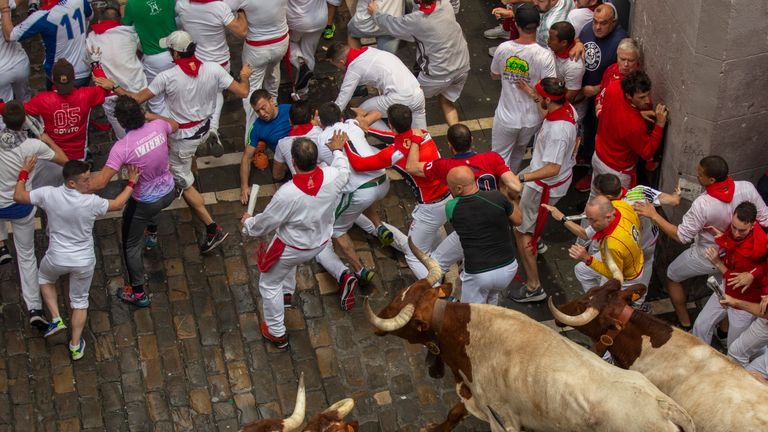 A runner falls down as the bulls come up behind them