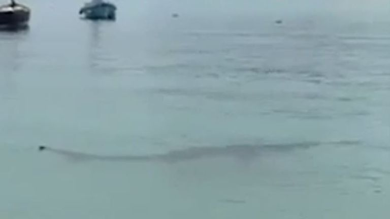 The sighting in St Ives has prompted a warning from the Shark Trust