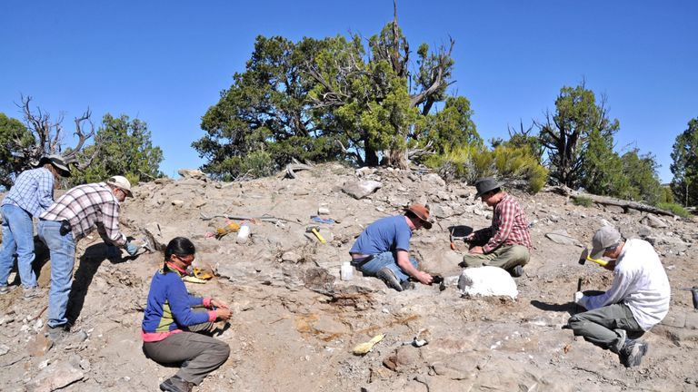 A Natural History Museum of Utah field crew excavate bones from the skeleton of Akainacephalus johnsoni in 2009. Credit: Randall Irmis/Natural History Museum of Utah