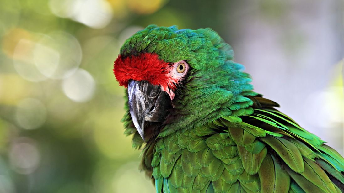 Great green macaw parrots were the most clever traders in the experiment