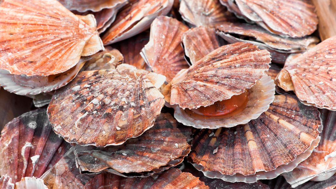 French fishermen attack British boats 'with smoke bombs' in scallops row