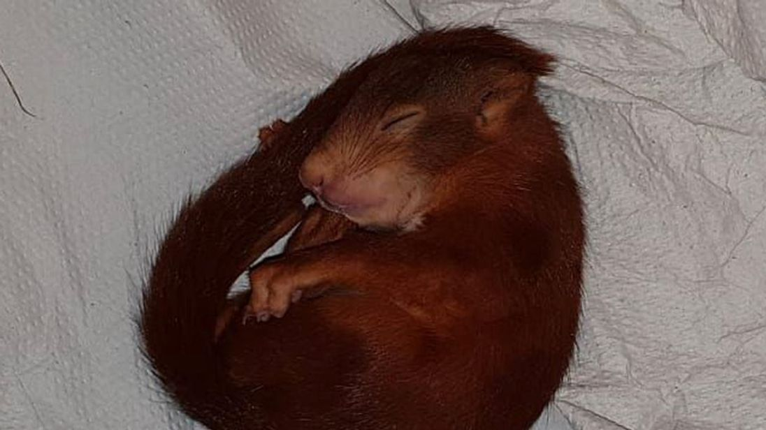 German police rescue man being chased by baby squirrel