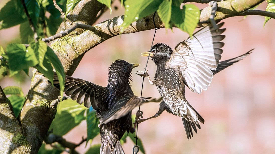 Antidepressants make birds less likely to attract potential partners, study finds
