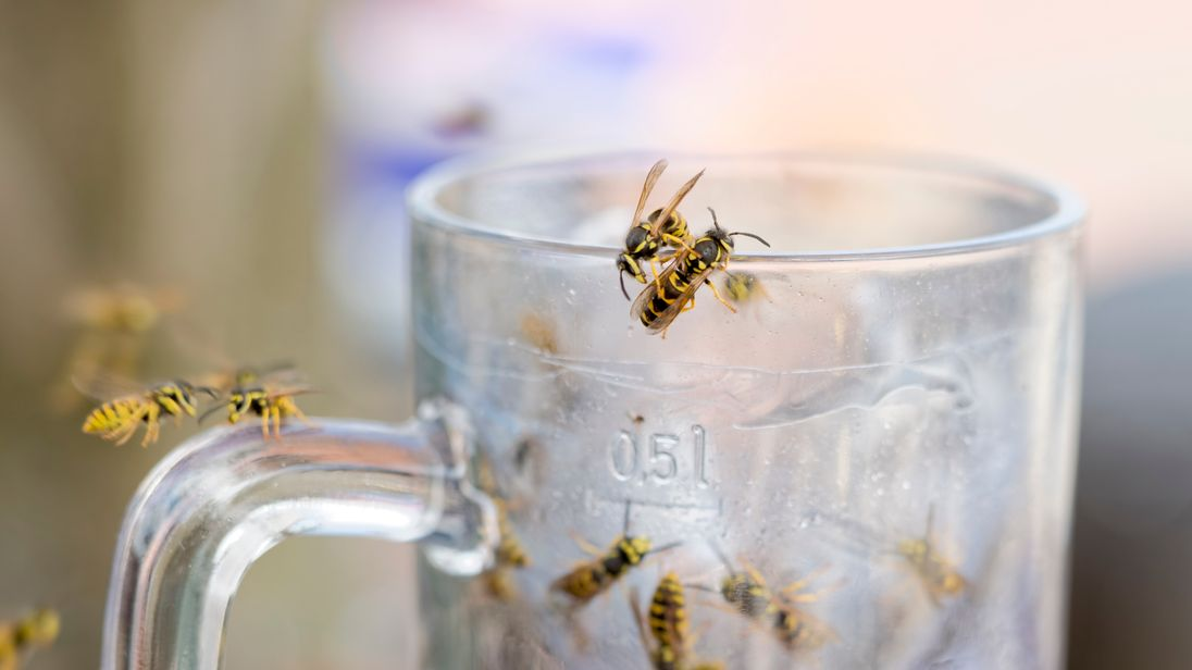 Wasps have been ruining outdoor activities for many this year