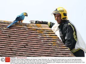 Jessie the parrot was stuck on a neighbour's roof for three days