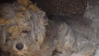A dog that looked like a 'burned, shaggy rug' has been found hiding amid the aftermath of the deadly fire in Mati, Greece.