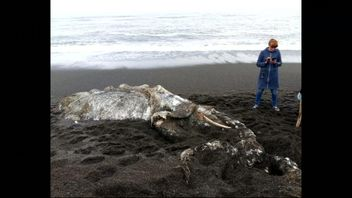 A hairy carcass that has washed up on the shore of eastern Russia's Pakhachim has gathered curious onlookers