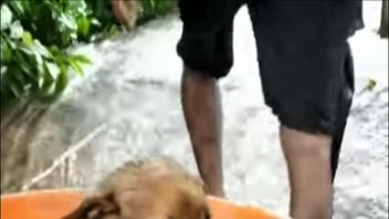 Puppy rescued from flooded dwelling in Kerala